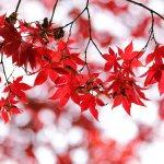紅葉 風景 自然