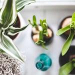 植物 インテリア ショップ