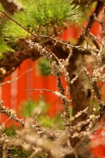 銀座の三越の入り口に飾ってある生け花(?)。松と梅。後ろの赤がとても私的にはお正月のイメージを醸しています。