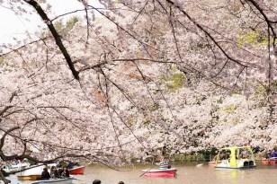 井の頭公園 Inogashira Park, Tokyo