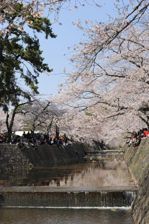 夙川 Shikugawa, Hyogo