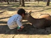Nara 01