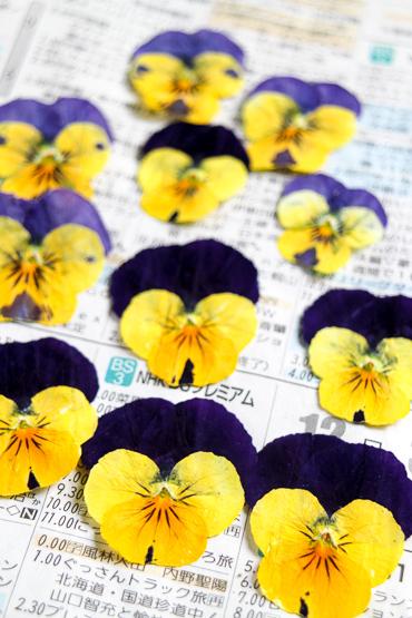 ビオラの押し花