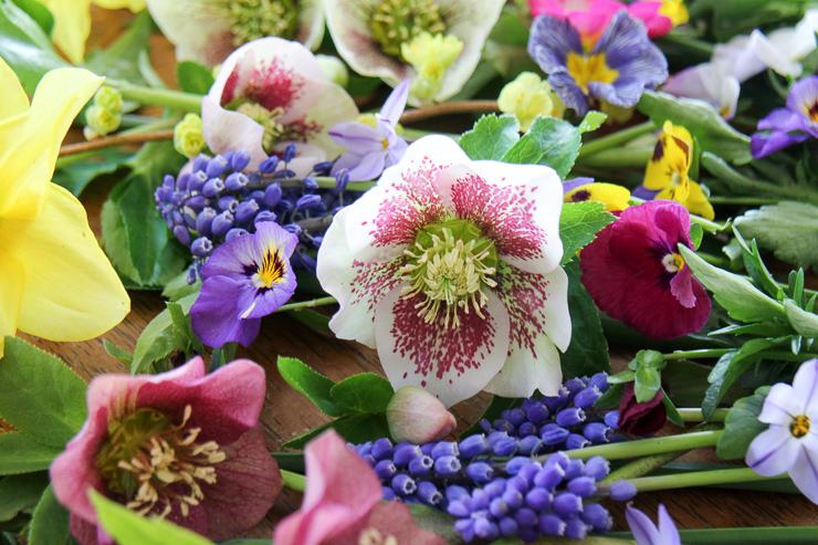 クリスマスローズと春の花