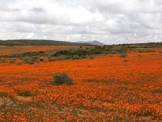 ナマクワランド Namaqualand