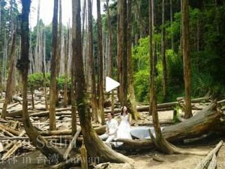 【TOP BUZZ】台湾 忘憂森林 Taiwan Wanyou Seilin
