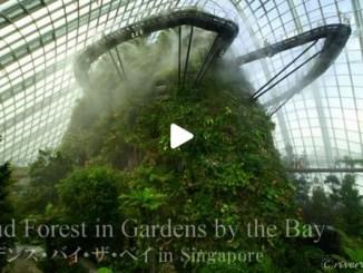 【Top Buzz】【絶景大陸vol.059】天空の城ラピュタの透明ドームがここに!ガーデンズ・バイ・ザベイ Garden by the Bay , Singapore
