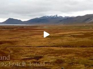 【TOP BUZZ】【絶景大陸vol.067】アイスランドの紅葉ドライブ!一面赤とオレンジの絨毯!羊も登場♪