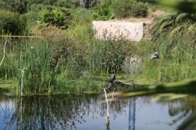 Intaka Ornithology 2016 (25)