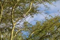 Intaka Ornithology 2016 (8)
