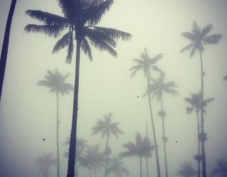 Cocora Valley on a foggy day