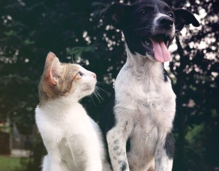 A cat and a dog sat together