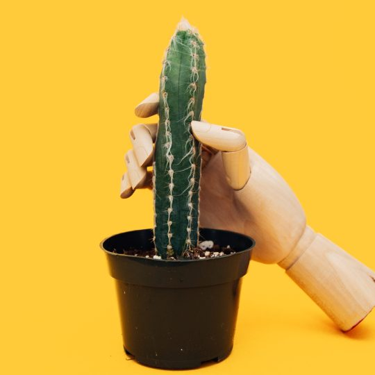 A cacti on a yellow background with a wooden hand wrapped around it