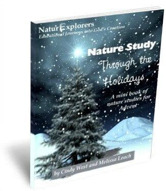5 No-Prep, Last-Minute Homeschool Christmas Ideas Nature Study Through the Holidays