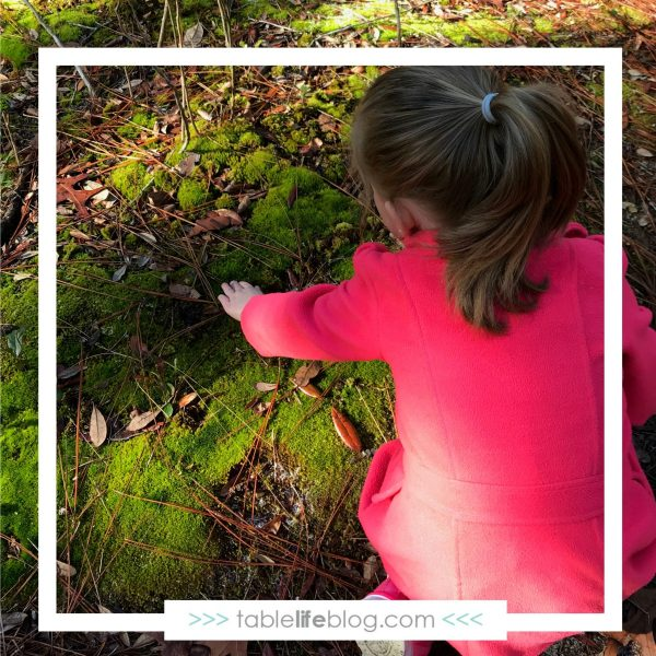 Learning to Love Nature Study: Tips from the Homeschooler Who Doesn't Like Birds, Dirt, & Hot Weather