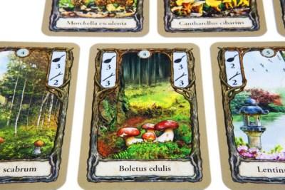 Fungi - Cards