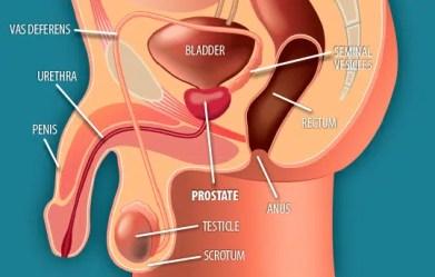 prostate location