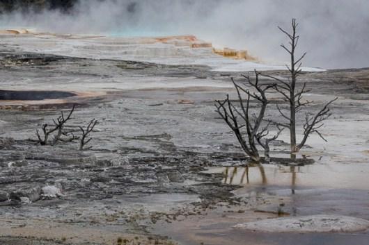 Yellowstone-3731