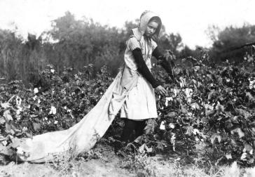 "Callie Campbell, 11 years old, picks 75 to 125 pounds of cotton a day, and totes 50 pounds of it when sack gets full. ""No, I don't like it very much."" Photographed in Potawotamie County, Oklahoma. on October 16, 1916."