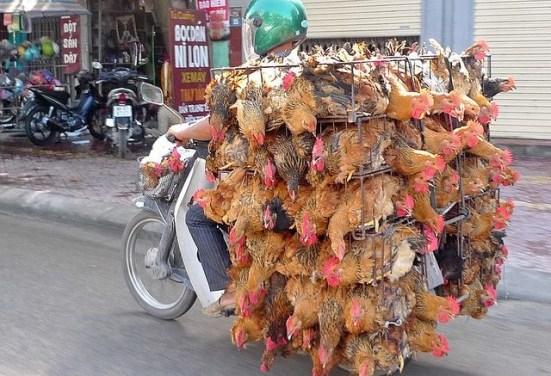 Người vận chuyển - phiên bản Việt.