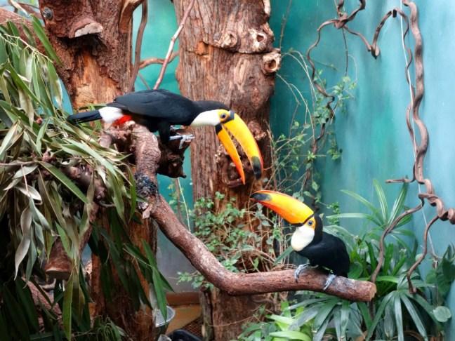 tache de rousseur blog voyage copenhague zoo2
