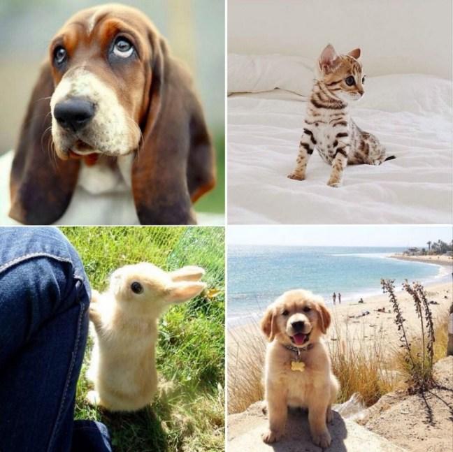 instagram_adorables_animals