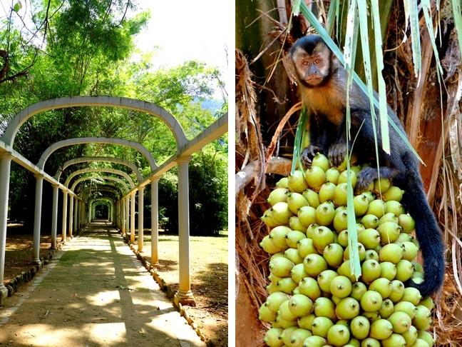 jardin botanique rio2