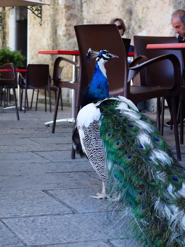 Blog Tache de Rousseur - Lisbonne juin 2015-75-2