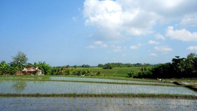 Voyage un mois en Indonesie - Bali - Environ Ubud