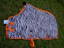zebra-with-orange-trim-8