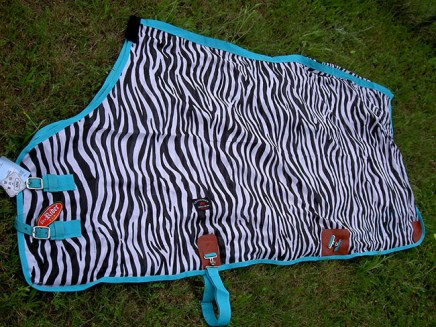 zebra-with-turquoise-trim-8
