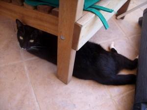 Adopt a cat Belize