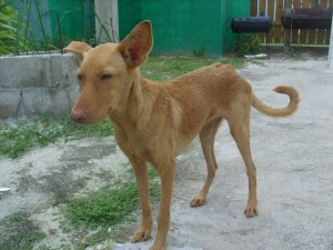 Adopt a pet Belize