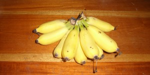 My simple pleasure - bananas off the tree in our yard