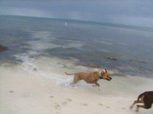 Ginger playing