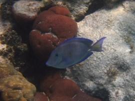 Snorkeling Barrier Reef