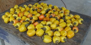 Cashew Fruit Belize