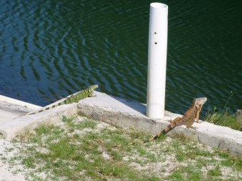 Belize animals