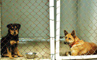 Saga Humane Society Ambergris Caye Belize