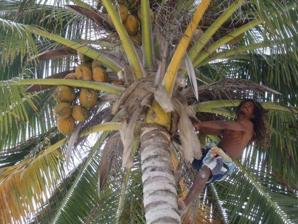 Exotic Caye Crazy Canucks Sunday Jam