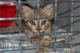 Saga Humane Society San Pedro Belize