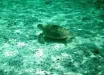 underwater universe marine life