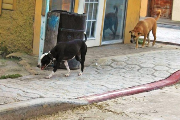 dog control act and belize humane society
