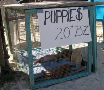 Ambergris caye belize animal shelter