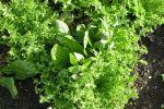 sol farms organic greens belize