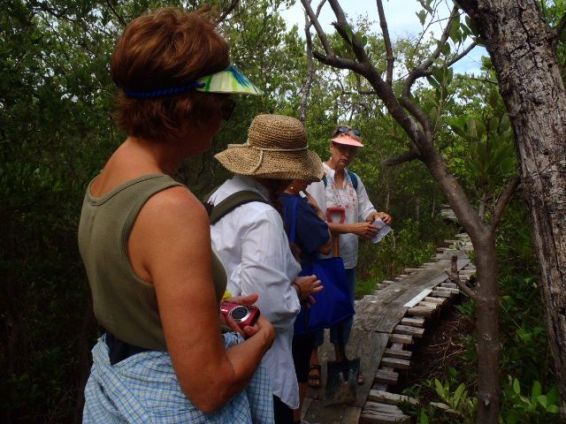 mangrove collection belize