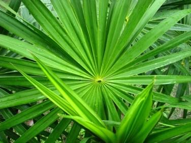 palmetto belize