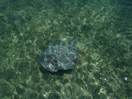 belize sea life