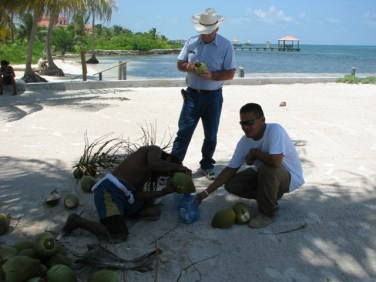 coconut water picture