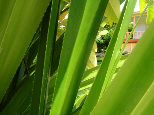 belize plants